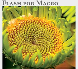 M2 Online Learning Flash for Macro