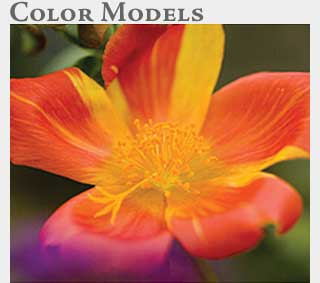 M2 Online Learning Color Models
