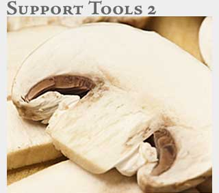 M2 Online Learning Support Tools 2